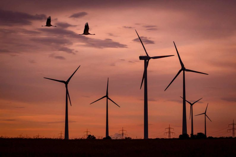 Birds and wind turbines