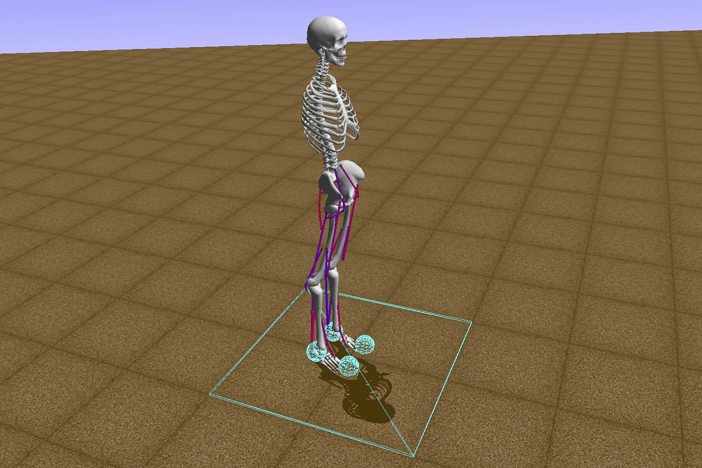 "Computer model of human bones, muscles and motor control similar to the ones participating in the ""Learning to Run"" machine learning competition."