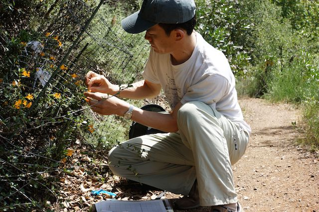Stanford associate professor Tadashi Fukami doing fieldwork with flowers at Jasper Ridge Biological Preserve