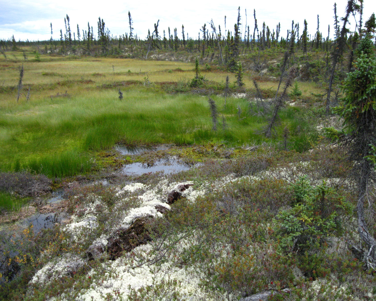 melting permafrost in Alaska