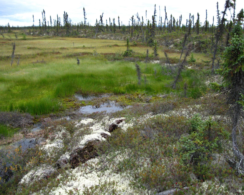 melting permafrost in Alaska