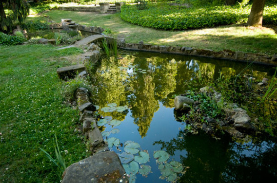 A photo of a pond with lily pads and the greenery surrouding it.