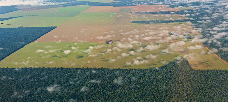large industrial soybean field in the midst of a Brazilian forest which is home to indigenous people