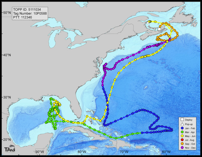 map showing where tuna were active during Deepwater Horizon spill