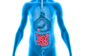 illustration of human featuring gut