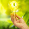 hand holding a light bulb with energy and fresh green leaves inside on nature background