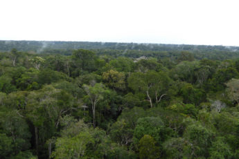 View of Amazon canopy