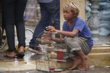 a young boy seated on a curb in the street, holding a bird cage