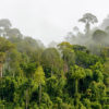 Treetops of dense tropical rainforest near Malaysia-Kalimantan border