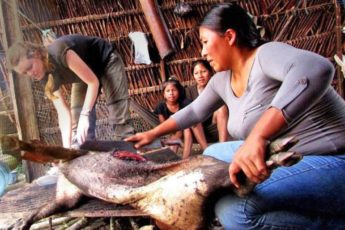 Earth Systems undergraduate student Madeline Lisaius helps an indigenous Waorani woman butcher a peccary in Ecuador in July 2015.
