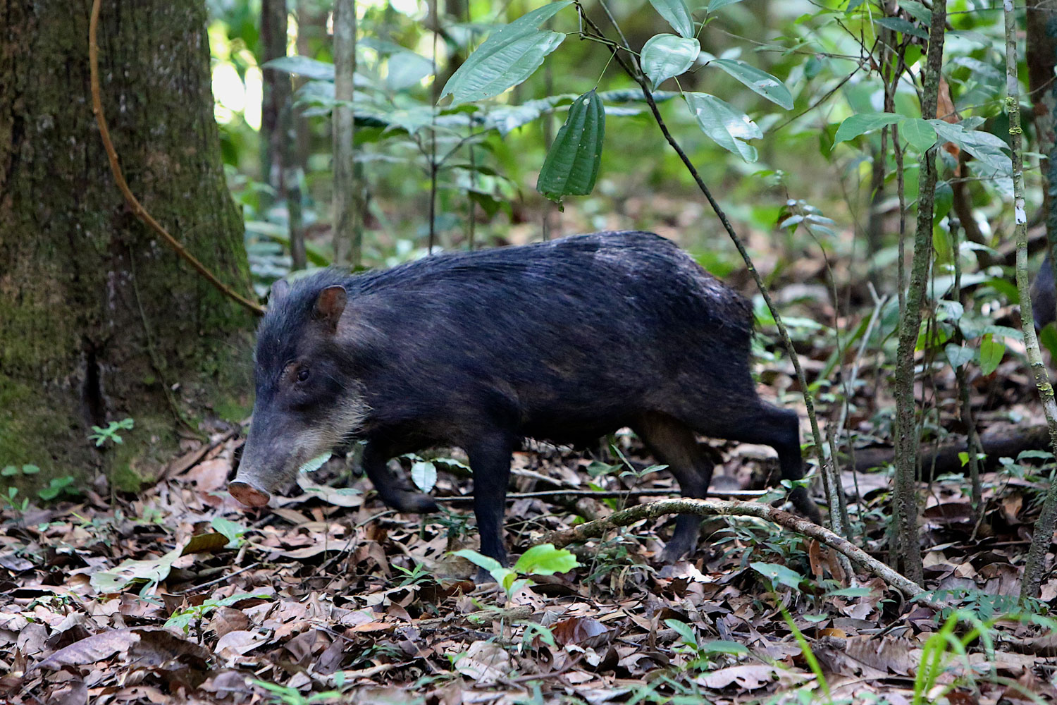 New Research Finds Animals May Help >> Animal Biodiversity Key Part Of Carbon Cycle Stanford News