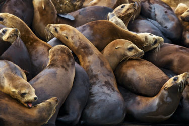 Sea lions in Moss Landing, California