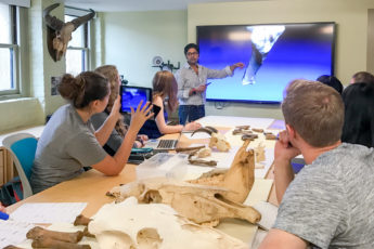 Krish Seetah, assistant professor of anthropology, in the classroom teaching a class on zooarchaeology. Bones are on the table in front of students and the professor is pointing at a 3-D image on a large screen in the front of the class.