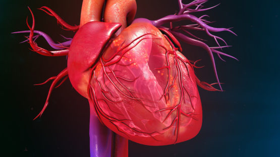 The Secret To Building A Strong Heart Blood Vessels