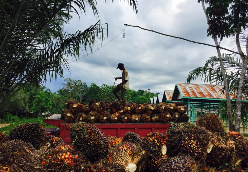Palm fruit worker in Indonesia