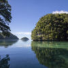 scenic photo of water rising to level of trees on Palau