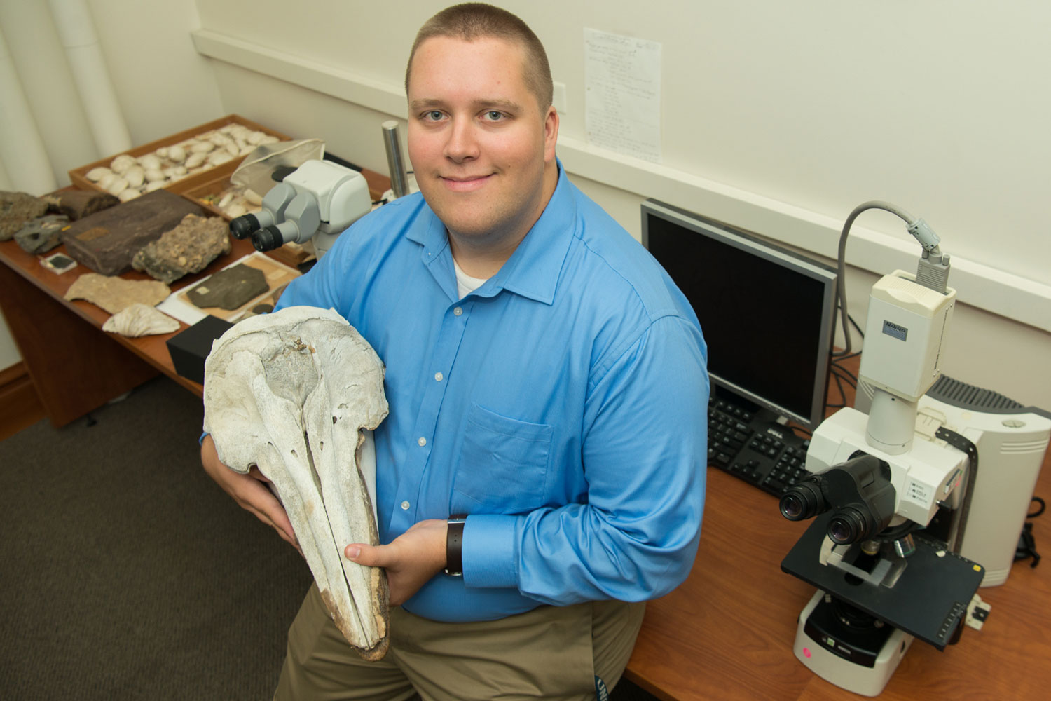 Geological sciences graduate student Will Gearty displays a dolphin skull in a laboratory on Stanford's campus. Gearty is the lead author on a study showing energy balance constrains the body size of aquatic mammals, including seals, sea lions, manatees, dugongs, whales and dolphins.