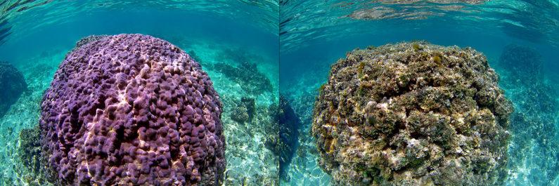Healthy and unhealthy coral