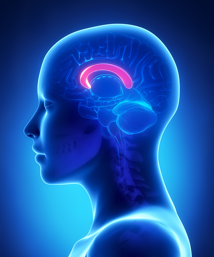 Where Brain Shakes May Be Key To >> Study Reveals Concussion S Complex Nature Stanford News