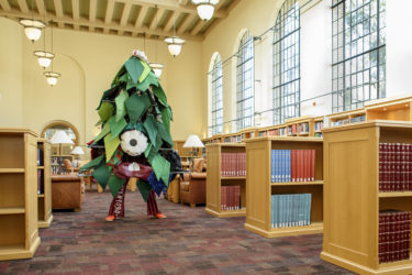 Stanford Tree Anaxi Mars in the library's Lane Reading Room