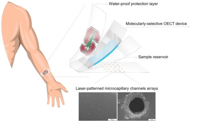 Drawing shows details of the layers contained in the cortisol biosensor developed by the Salleo lab and two close-up images of the holes in the bottom of the sensor that wick in sweat.