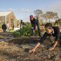 Students planting seeds at the Stanford Educational Farm