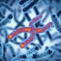 Illustration showing telomeres on chromosomes