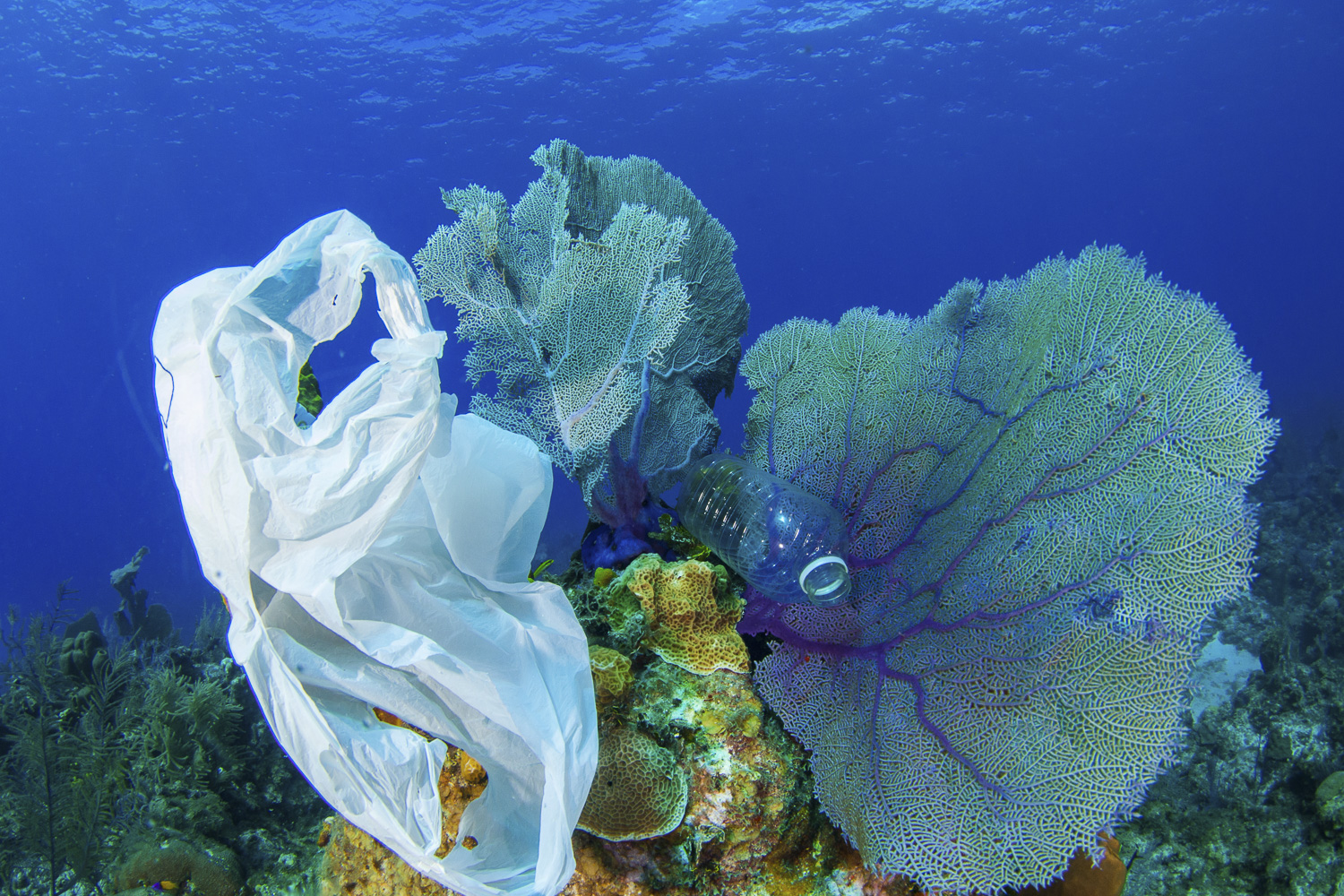 Plastic waste on a coral
