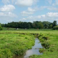 stream flowing through farm