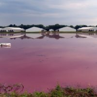A North Carolina pig farm's waste lagoon
