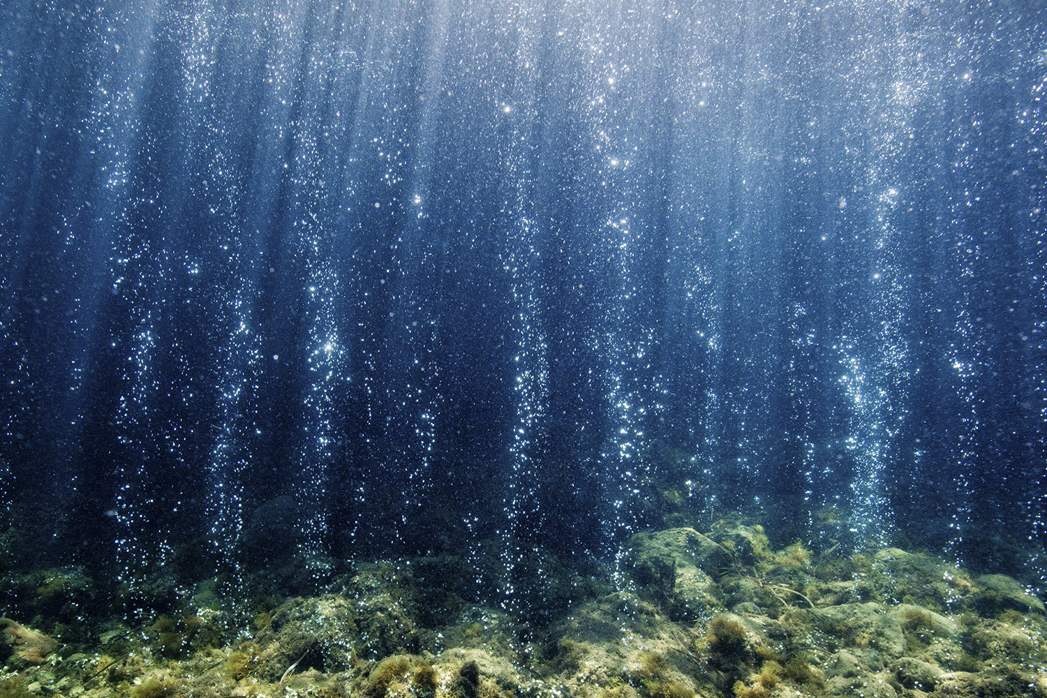 A glimpse into future oceans | Stanford