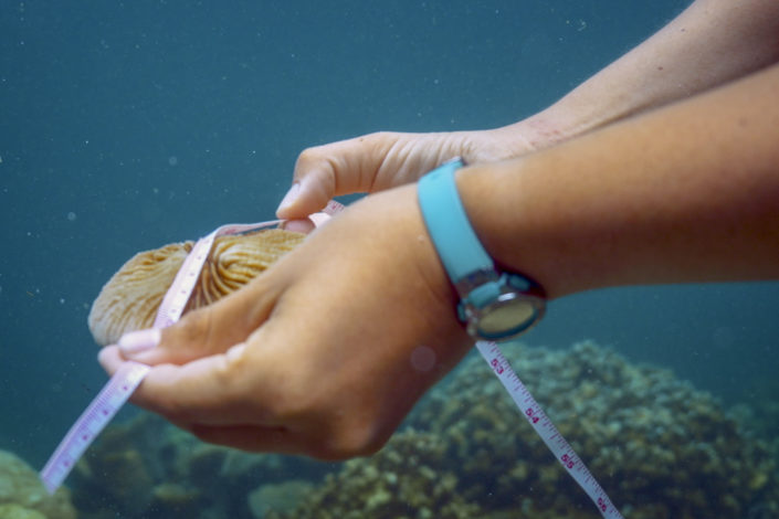 Hands measuring a coral)