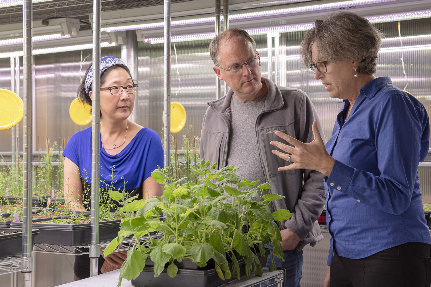 Sue Rhee, Thomas Clandinin and Miriam B. Goodman discuss the NeuroPlant project over a tobacco plant in the greenhouse.