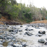 Lagunita creek still