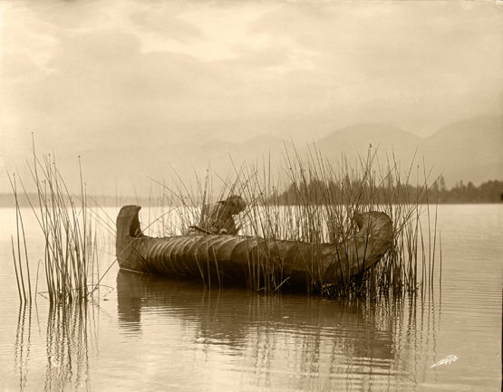 Edward Sheriff Curtis, Rush Gatherer photo