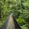 A suspended bridge through the rainforest