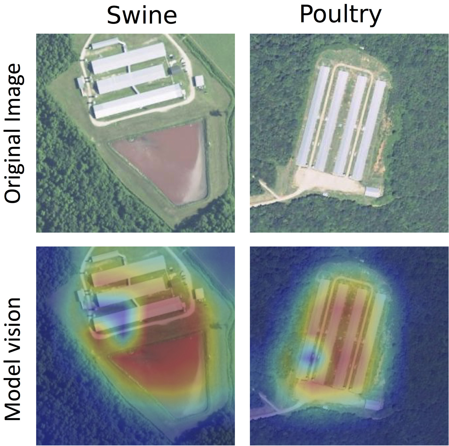 Sample swine (left) and poultry (right) facilities, with the original image (top) and a heat map of the way the algorithmic models processed the image (bottom). The red areas show where the model detected the likelihood of facility locations.