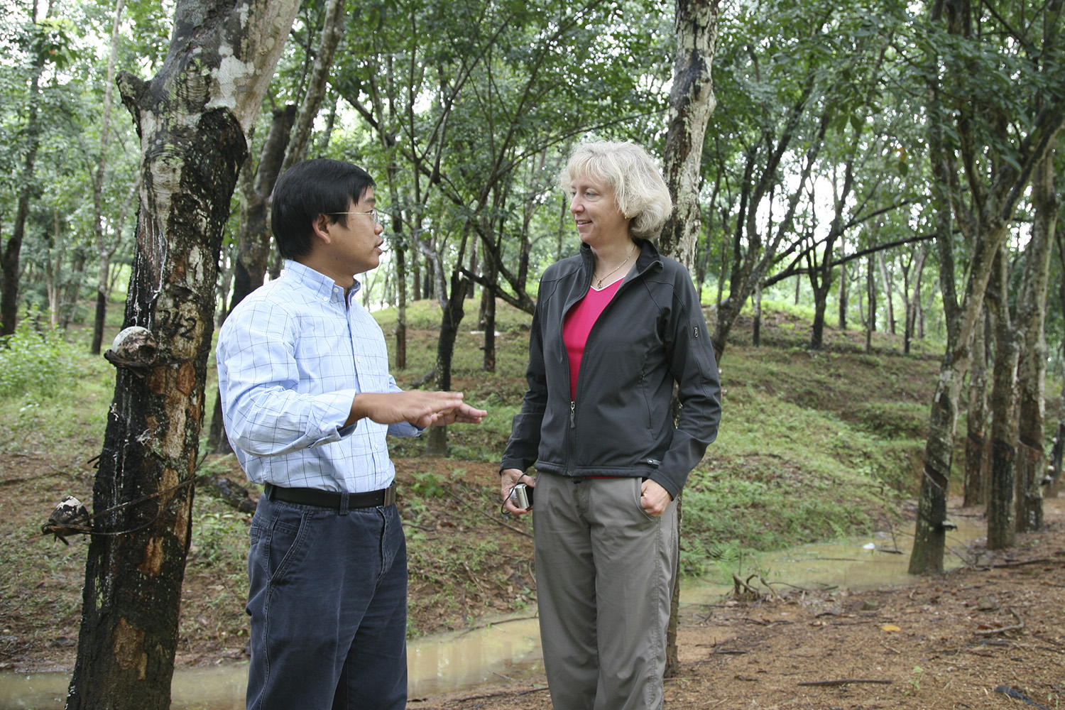 Gretchen Daily and lead author Hua Zheng conduct research on a Hainan conventional plantation.