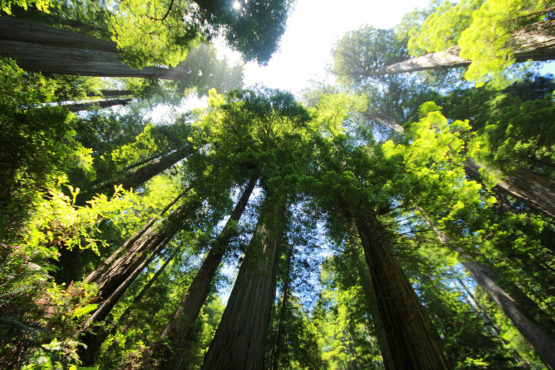 Trees in Sequoia National Park.