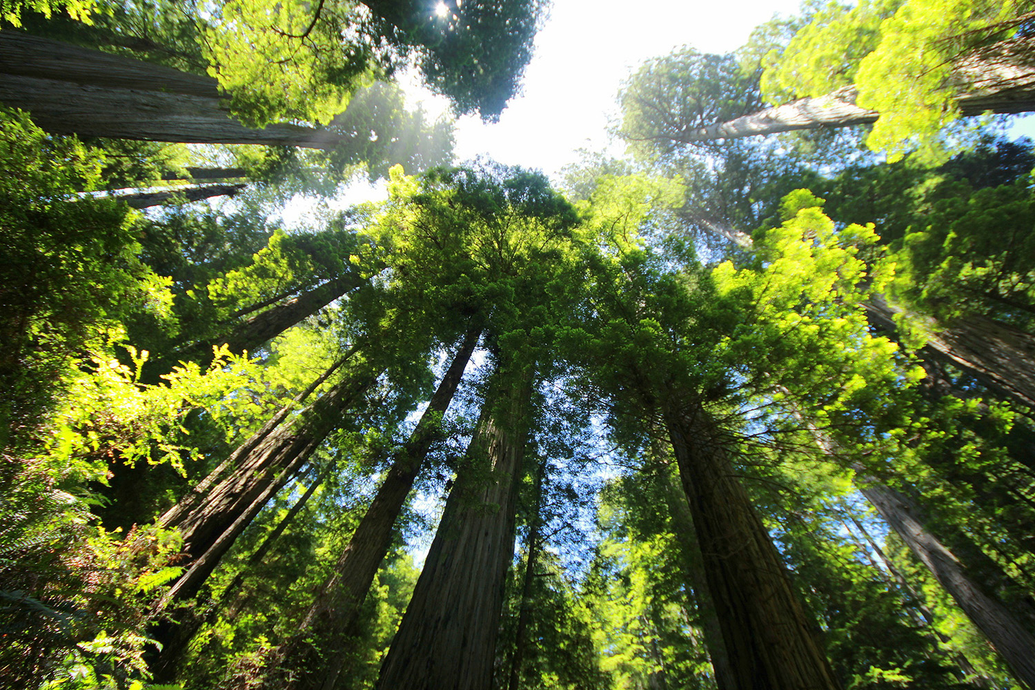 Gauging trees' potential to slow global warming - Stanford University News