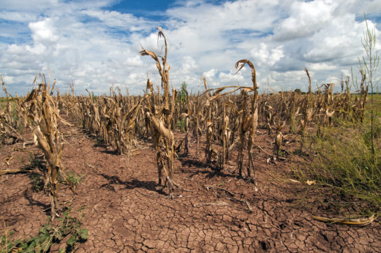 Drought/Heat waves