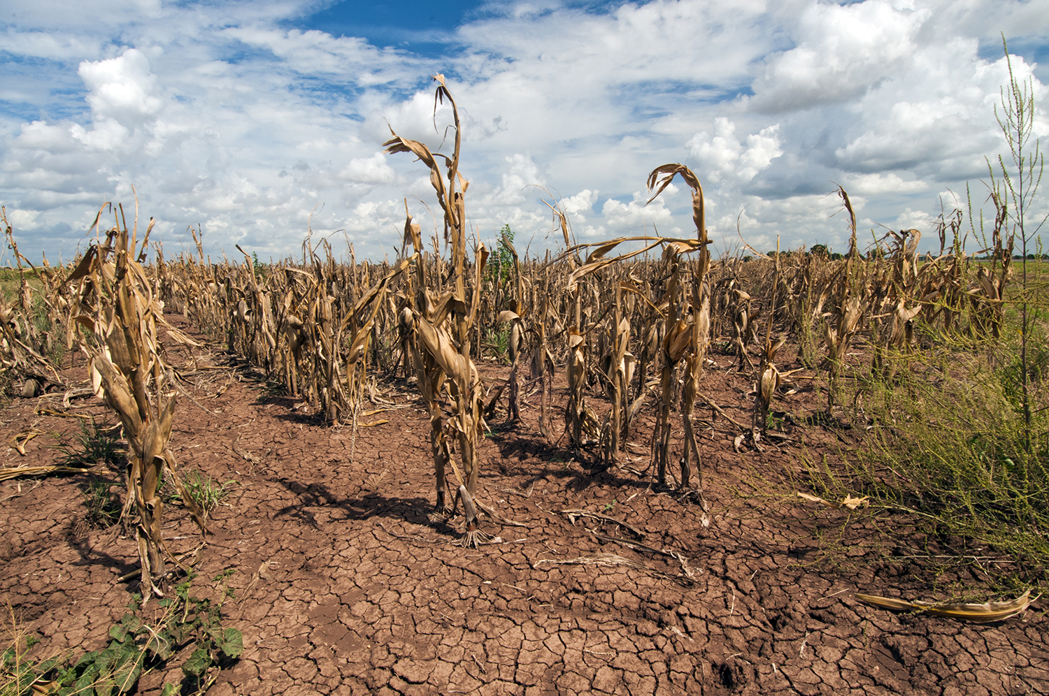 COVID-19 could exacerbate food insecurity around the world, Stanford expert warns