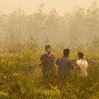 fire burning in Kalimantan Tengah, Indonesia 10/14/15