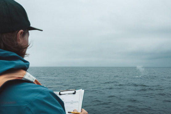 Will with a clipboard looking out at a blow from a blue whale