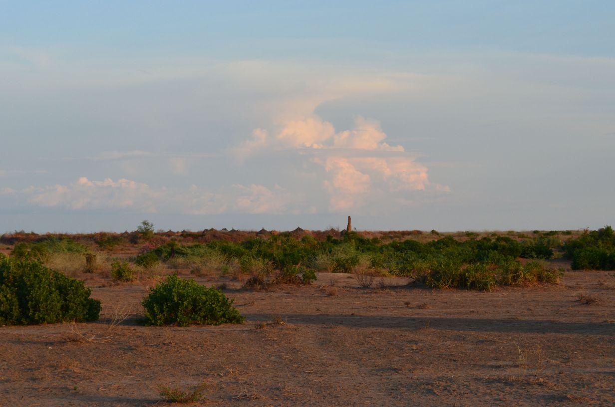 Desert with sparse shrubs