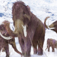 Illustration of a Woolly Mammoth grouping