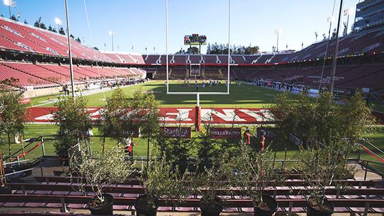 Stanford Stadium trees