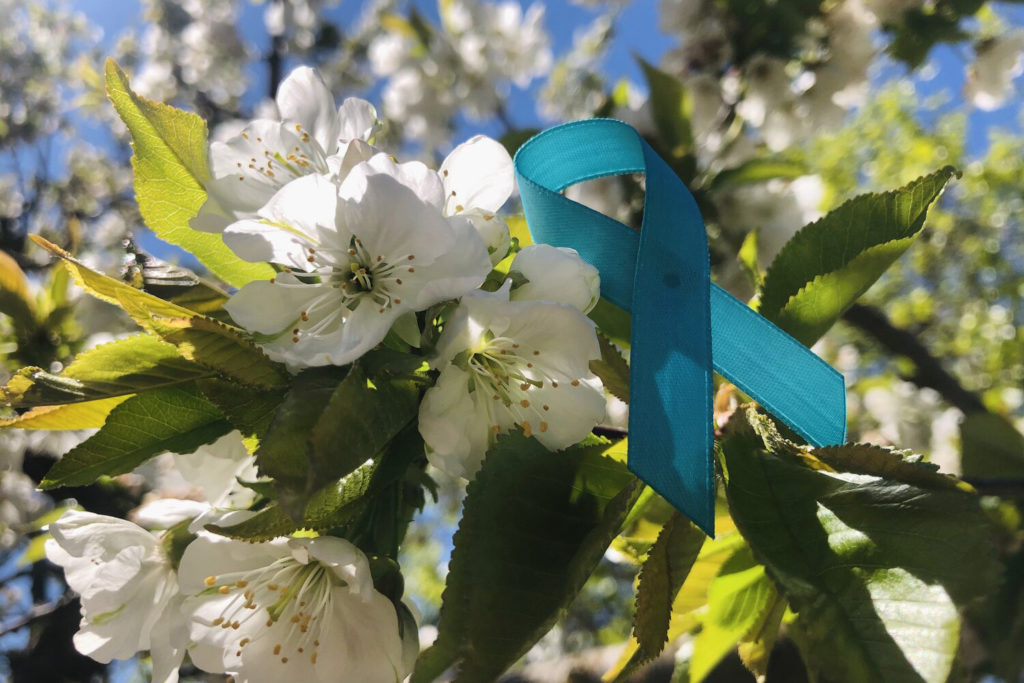 teal ribbon representing sexual assault awareness month