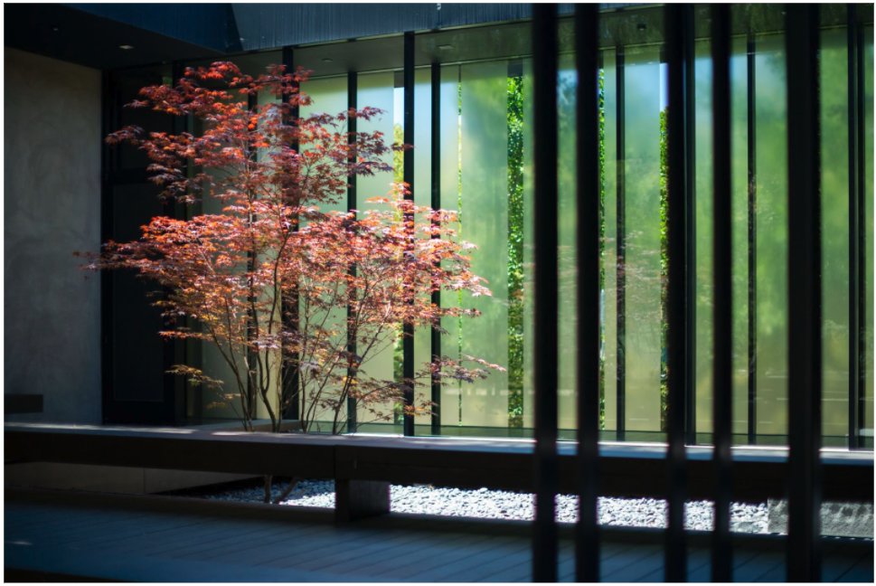 Blooming maple tree near a bench in Windhover Contemplative Center